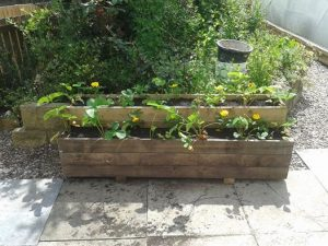 Andy's planters 1 2014