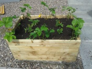 Andy's planters 3