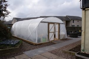 polytunnel march 3 2014