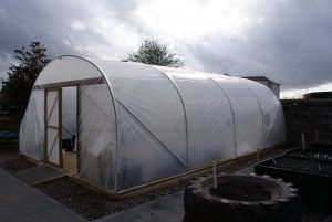 polytunnel march 5 2014
